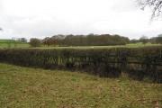 Small corner of deciduous woodland