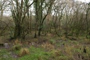 Swampy woodland, Torridge valley