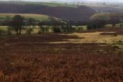View towards Bryn-coch