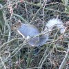 An Ullesthorpe resident