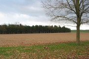 Woodland near Veldt House
