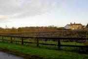 Rhubarb field in Winter