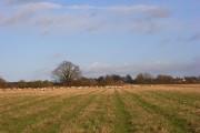 Farmland, Fawley