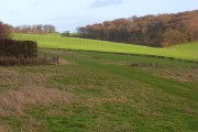 Pasture Hailey