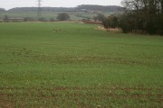 Farmland by Lownd Wood