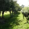 Bridleway to Bryn-y-pistyll