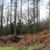 Winter woodland, Brierley