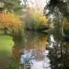 Reflected trees, Eardisland