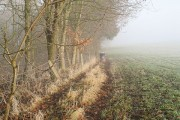 Pheasant feeder, Buckton
