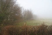 Hedgerows, Weston