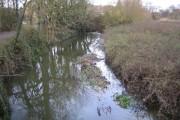 River Rib in Bengeo
