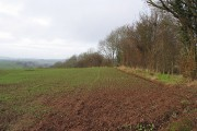 Field by the bridleway, N of Hoarwithy