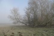 Sallies, Adley Moor