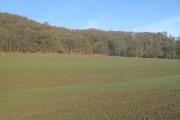 Winter crops, Gatley