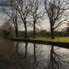 Trees reflecting in the River Lark