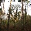 Felbrigg Park Great Wood