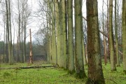 Winter woodland near Ballymena