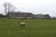 Sheep and unnamed farm buildings