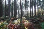 Binton Wood