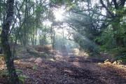 Woodland copse on Yateley Common