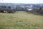 Common Moor