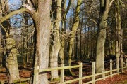 Woodland near Ballymena