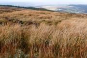 View from Mynydd Llywd