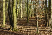 In Colwick Hall Woods