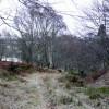 Birchwoods near Balnagown