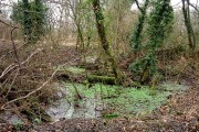Barton Stacey -  Waterlogged Woods