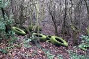 Woodland dump
