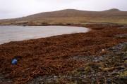 Kelp Mountains