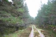 Forest Road, Inveruglas.