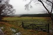 Gate and field near Achnahannet