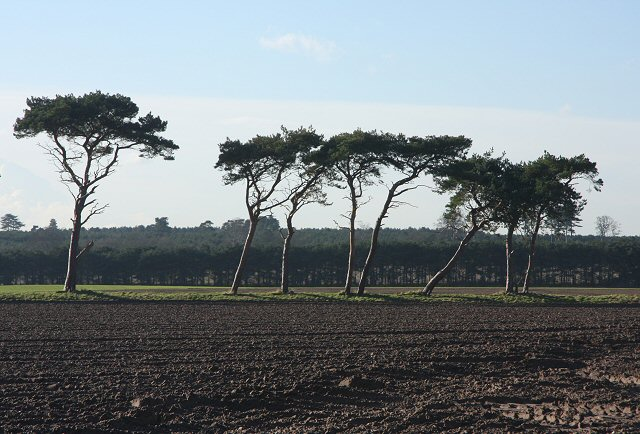 Trees at Butley