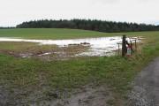 Waterlogged farmland near Queen's Wood