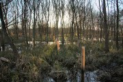 Flooded wood at Lackford