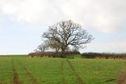 Fields near Blackwater Bridge