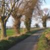 Trees beside lane to Hemingstone
