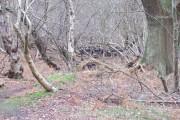 Deer in Captains Wood