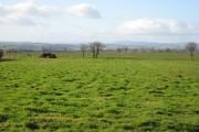 Flat farmland near Crossway