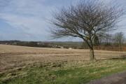 Walk Farm field, Little Weighton