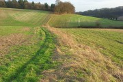 Field margins, Ashampstead