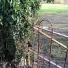 Rusty old gate, Attenborough Cricket ground
