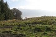 Woodland edge, Rossie Ochill