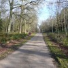 Clumber Park - Approaching Crossroads in Hardwick Wood