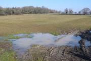 Waterlogged field near Melbury Osmund