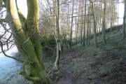 Woods near Lord's Stone