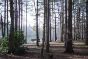Woodland next to Heath Lake