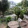 Tree stump, Oldway mansion rock gardens, Paignton